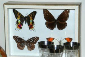 collection de papillons Brocante de la Pointe Minard vendus