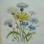 sous verre fleurs des champs à la Brocante du Prieuré de Chichée près de Chablis